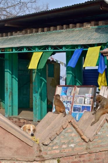 Monkey Temple Kathmandu